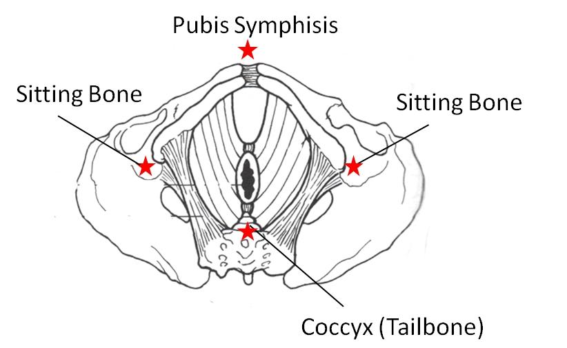 pelvic floor power